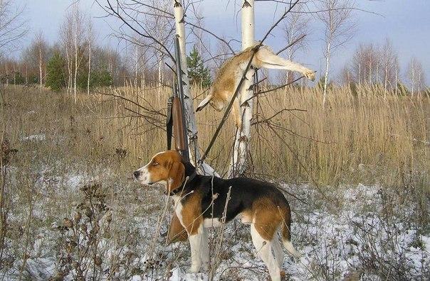 http://www.zakabanom.ru/image/article/2/9/3/1293.jpeg